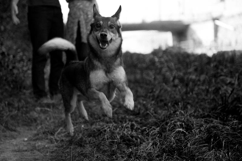 intime schwarz-weiß Paarfotos mit Hund in Wien Barbara Wenz Fotografie